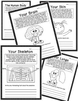 Human Body Unit: Foldables, Writing, Vocabulary