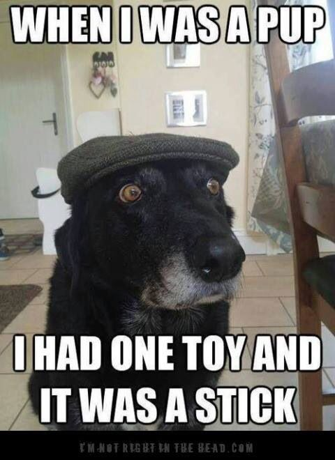 Love The Old Dogs Funny Dog Memes Funny Dogs Silly Animals