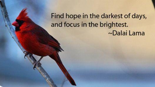 Cardinal Renewed Vitality Through Recognizing Self Importance