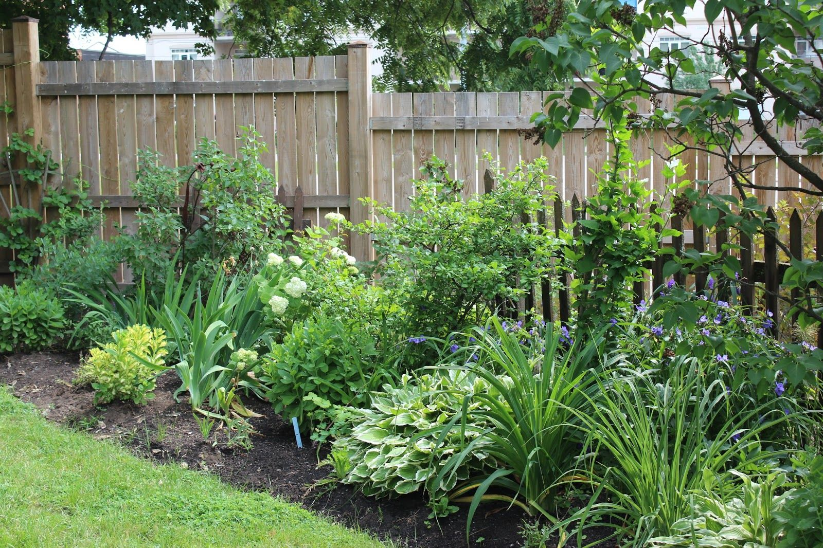 Border Shrubs Along Fence Google Search Small Garden Fence