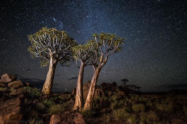 Africa Landscape And Animal Photography By Mark Dumbleton Landscape Photography Trees Night Landscape Photography Nature Photography