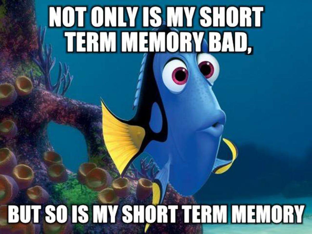 Image Result For Memes About Short Term Memory Finding Nemo Funny Funny Disney Jokes Disney Jokes