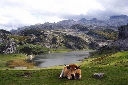 Lagos De Covadonga Asturias Spain Lagos De Covadonga Lugares De España Paisajes De España