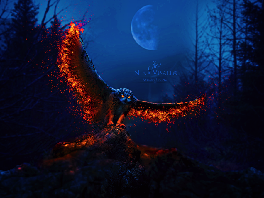 Fire Owl By Nina Visallo Deviantart Owl Spirit Animal Barn Owl Owl Photos