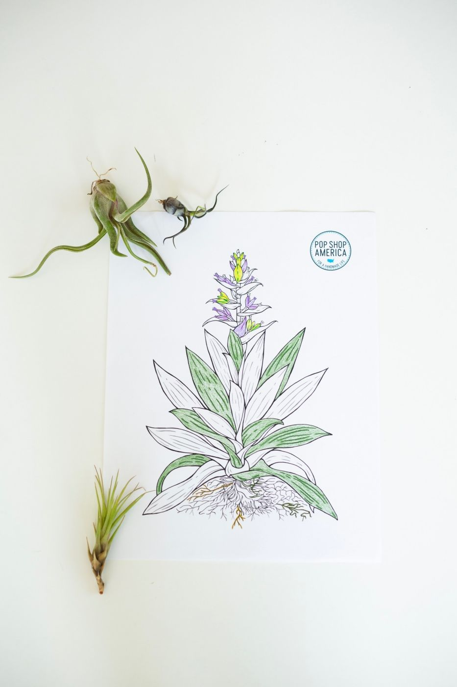 Air Plant Adult Coloring Pages Adult coloring pages
