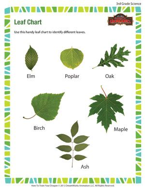 Leaf Chart - Printable Third Grade Science Worksheet | Third ...