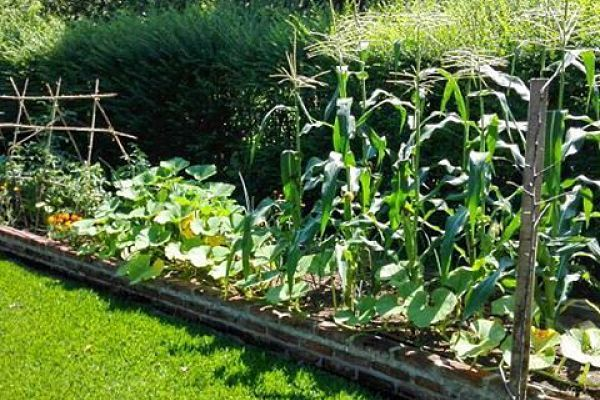 Huerta en casa: cómo hacer el mantenimiento orgánico – Buena Vibra