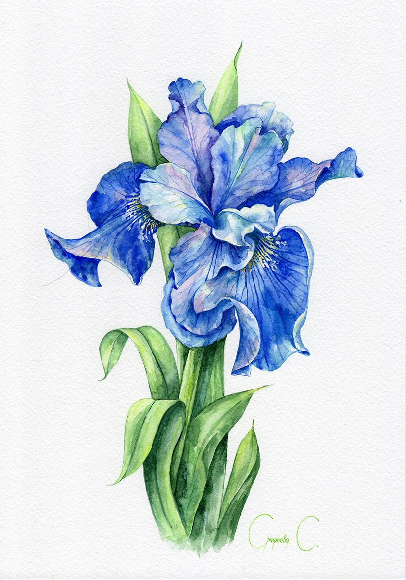 Flowers Blue Purple Iris Green Watercolor Original Painting