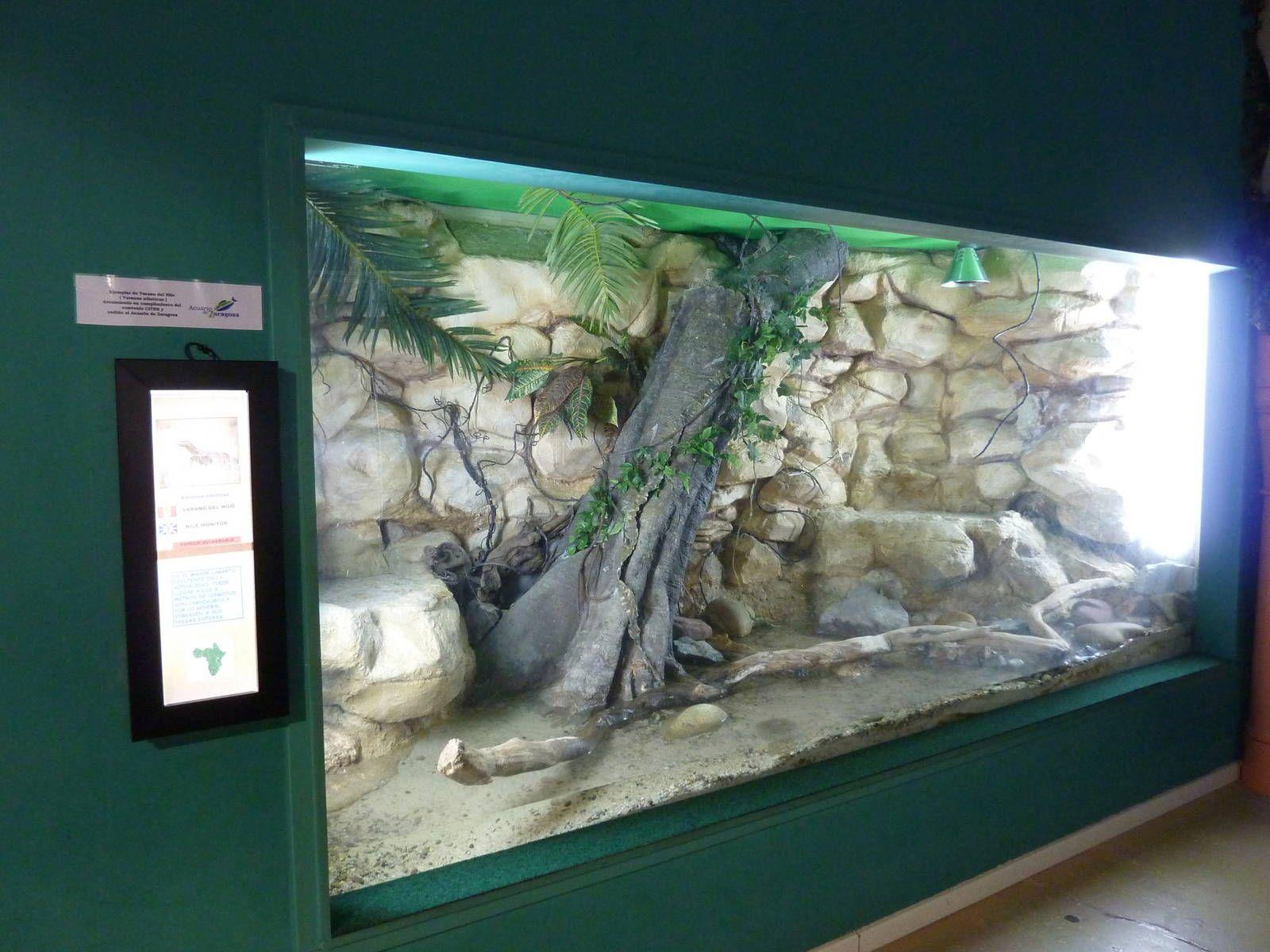 Nile monitor enclosure | Vivarium | PinterestLace Monitor Enclosure
