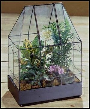 Small Arched Greenhouse Wardian Case Terrarium Potted