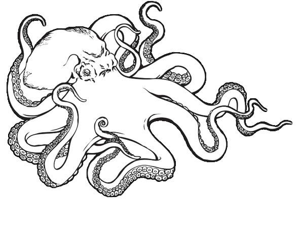 Octopus Sea Monster Octopus Coloring Page Octopus Coloring