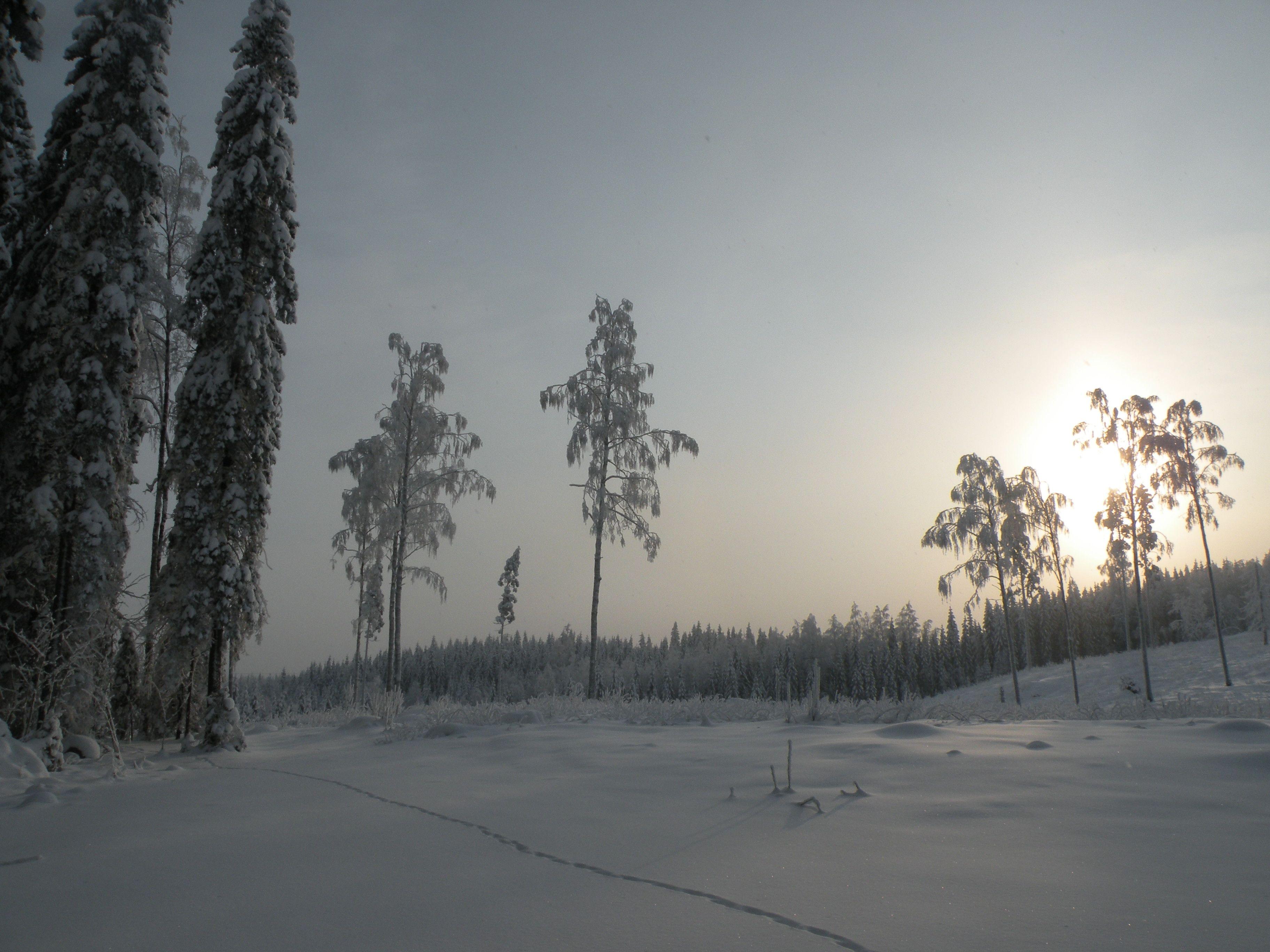 Jyväskylä, Ylä-Myllyjärvi, lenkkimaastot
