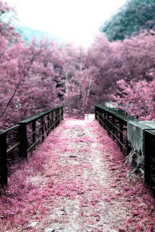 Framed Print Pink Floral Trees Along a Ruined Bridge Picture Poster Art