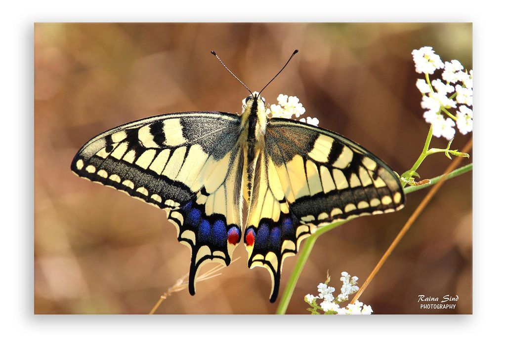 Butterfly Photography Canvas Art Print In 2020 Canvas Art Prints Art Prints Canvas Art