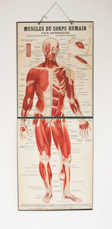 Body Muscles Chart Erkalnathandedecker