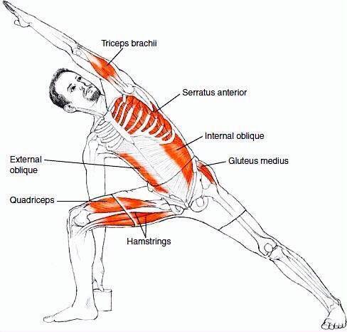 Yoga streching (Psoas Exercises Yoga) | Anatomical structure ...