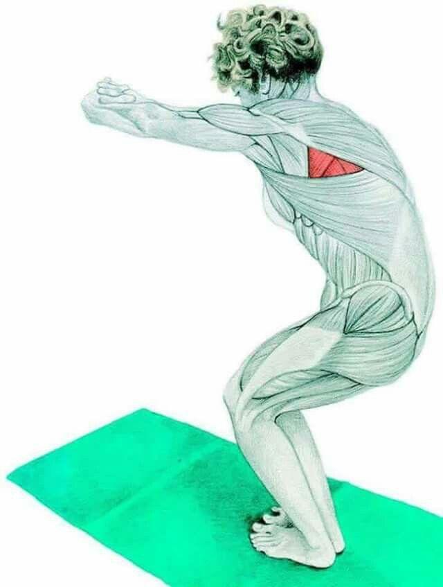 Pin de M-Mostafa en Stretche | Pinterest | Ejercicios espalda ...
