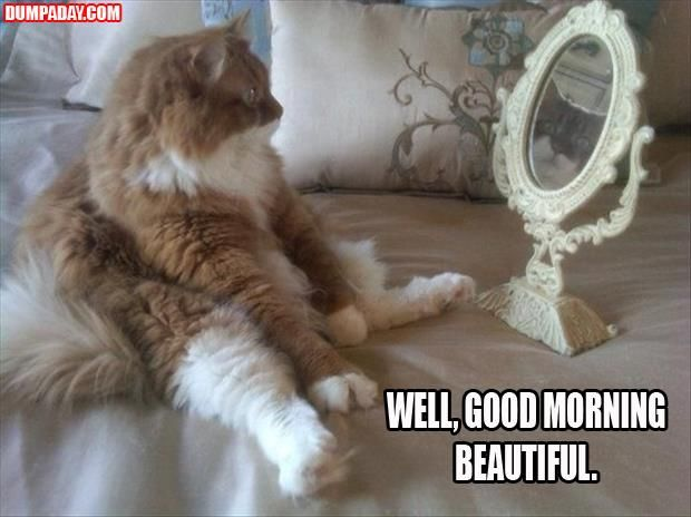 Of The Funny Cats  Pics Mirror Mirrormirrorscute Animalsfunny
