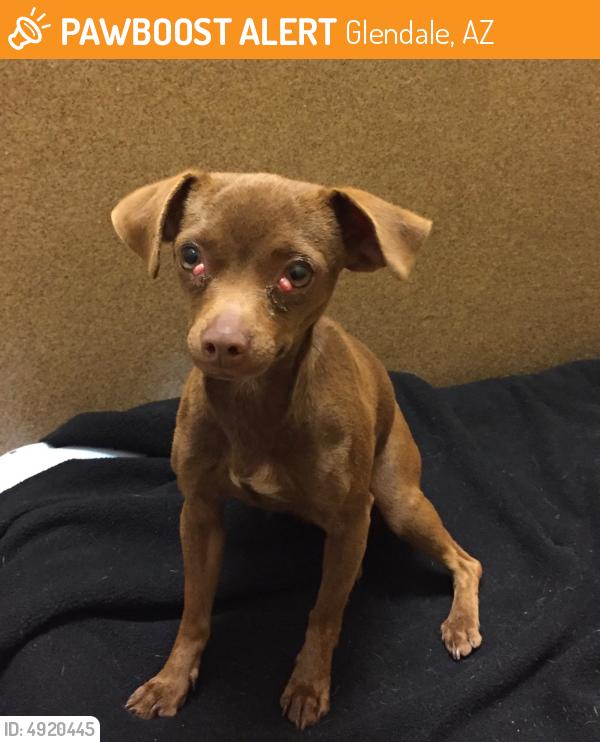 Found February 16 2018 Glendale Az 85306 Near W Banff Ln N 47th Ave 619 569 4066 Losing A Pet Pets Find Pets