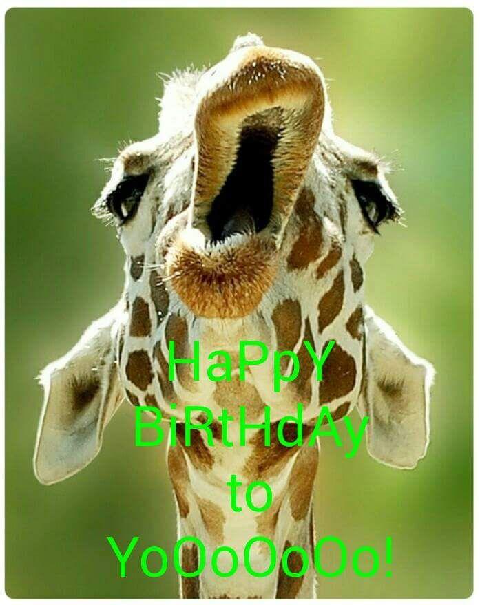 Happy Birthday To Yooooooo Giraffe Meme Animals Funny