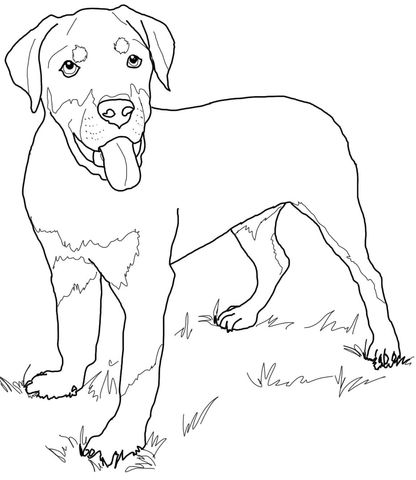 Rottweiler Puppy Coloring Page Puppy Coloring Pages Dog Coloring Page Rottweiler Puppies