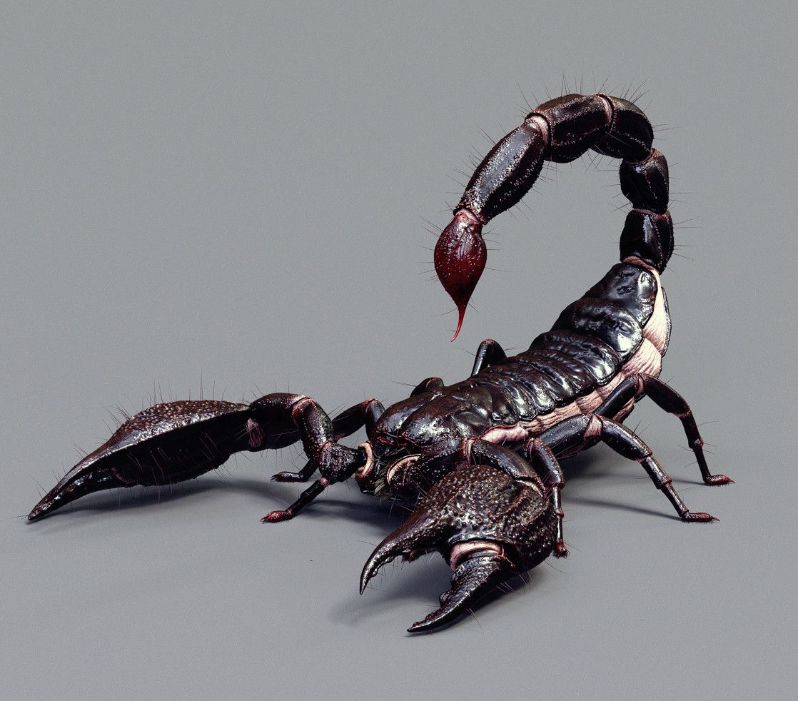 Asian Scorpion, Se June Cheun on ArtStation at https://www ...