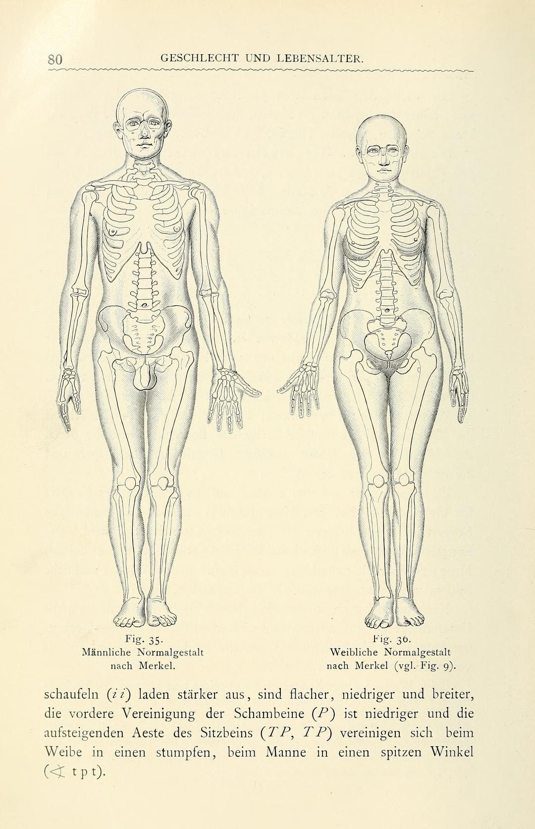 Die Schönheit des weiblichen Körpers : den Mütt... | Humans ...