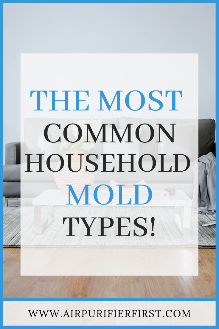 12 Common Types Of Mold Found In Home (With images