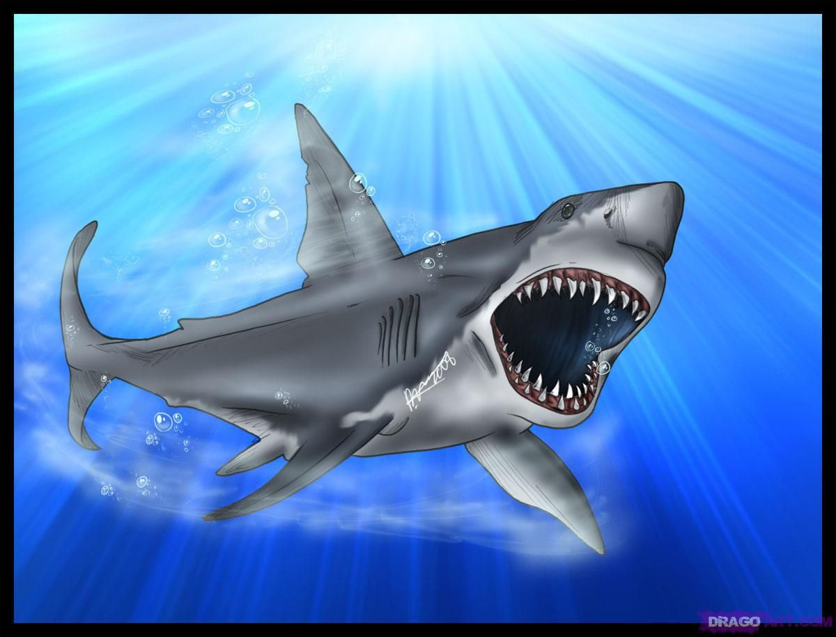 Scary Great White Shark
