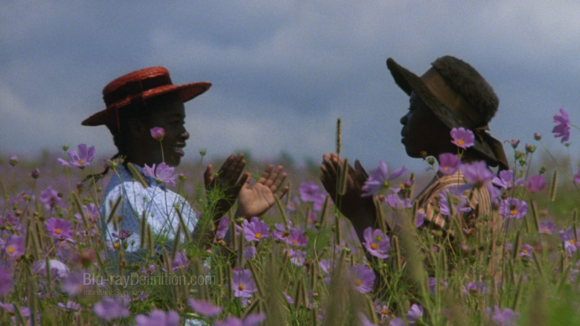 The Color Purple Blu-ray Book Review | Pinterest | Book review ...