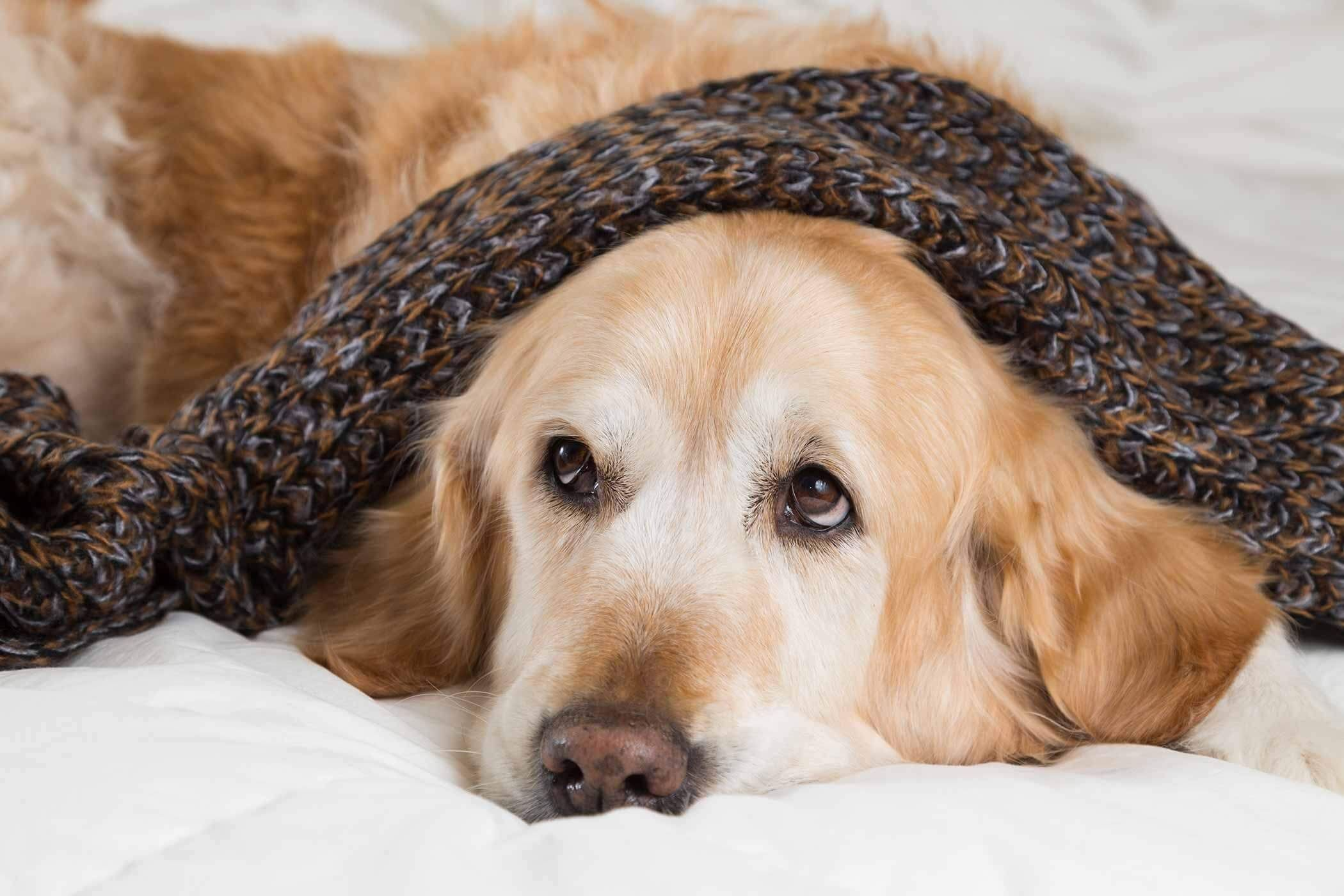 Beware Of The Dog Food Poisoning Symptoms With Images Dog Cold