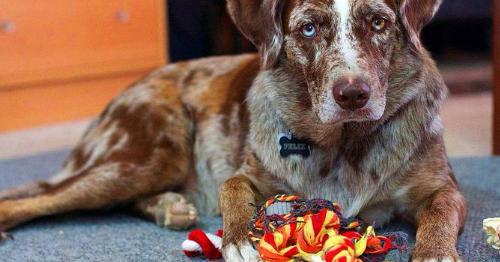 Pin on Companion Animal Care