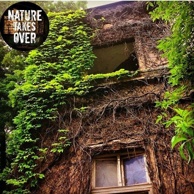 @nature_takes_over Instagram photos | Websta (Webstagram)