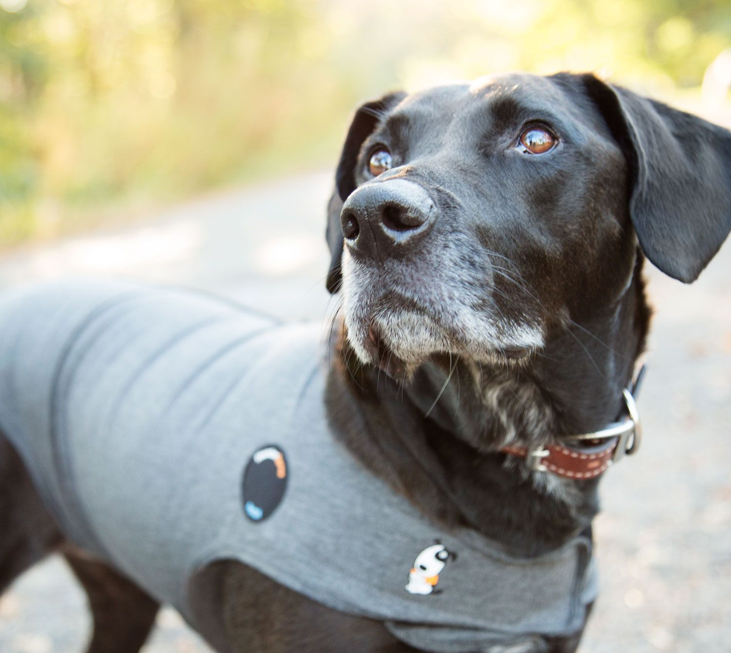 Thundershirt Calming Jacket for Dogs Dogs, Anxious dog