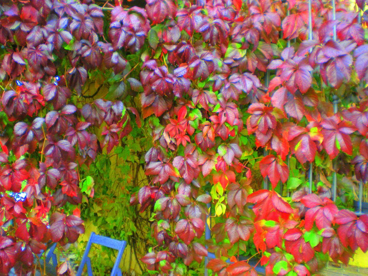 Sedie viola ~ Con una sedia viola giardino pinterest sedia viola viola e