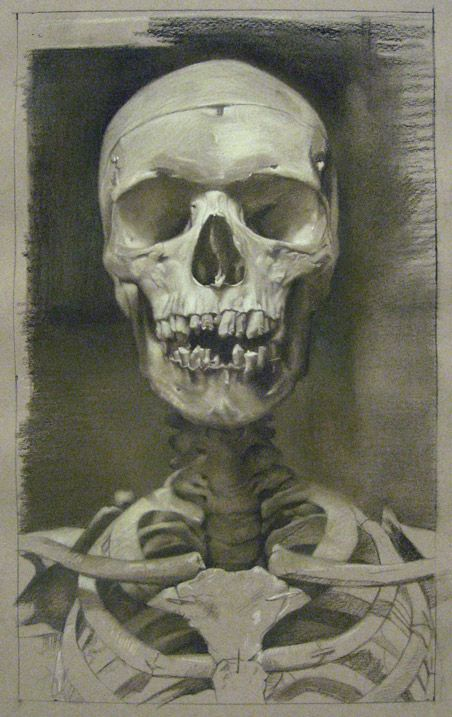 Gallery Henoch - David Kassan Anatomy Study in Sepia, charcoal and ...
