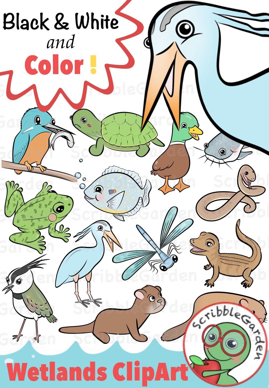 Habitat animals wetlands clipart pack by scribblegarden