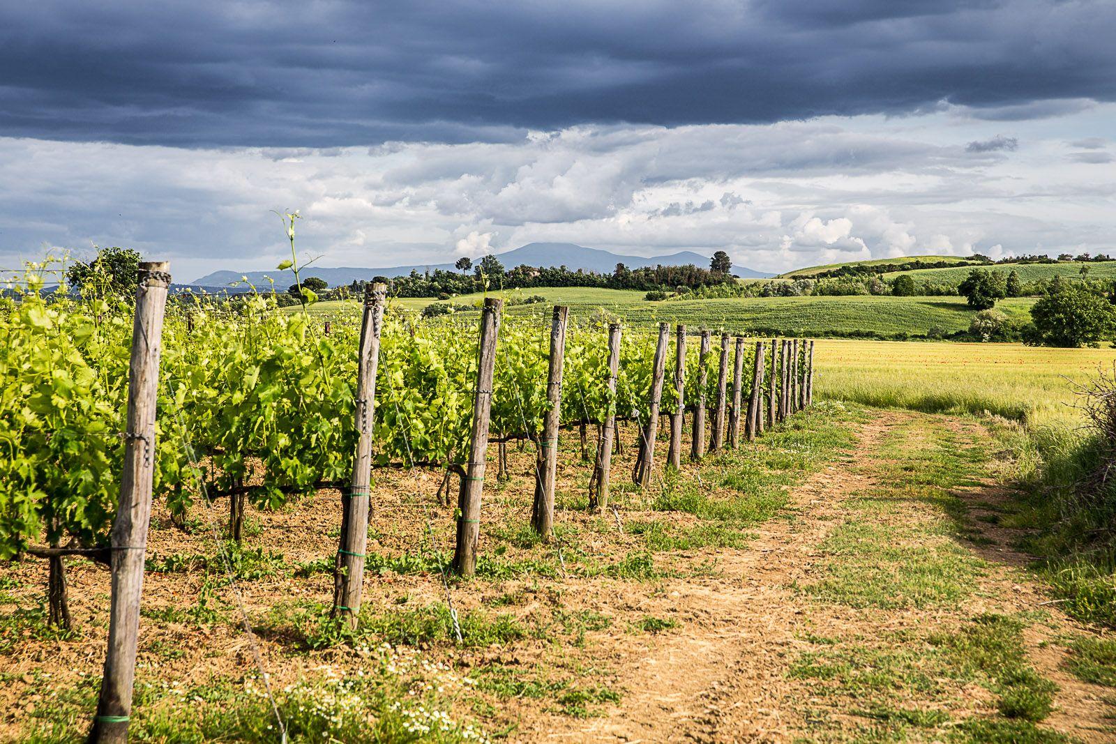 La terra dei vini e della buona cucina !!!
