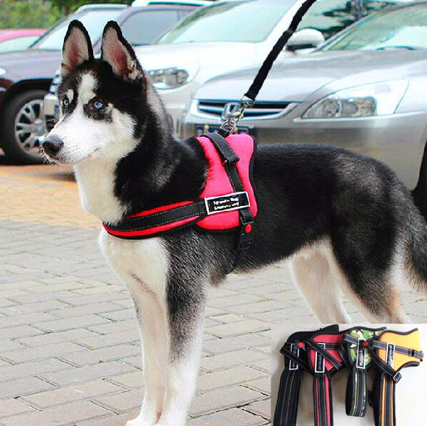 This No Pull Training Sport Harness Is A Great Fit For Medium To