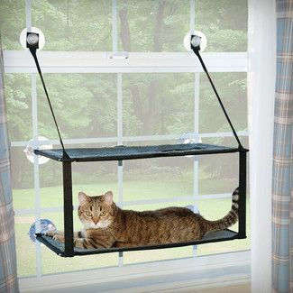 Found it at AllModern - K&H Manufacturing Kitty Sill Double Stack Ez Window Mount Cat Perch