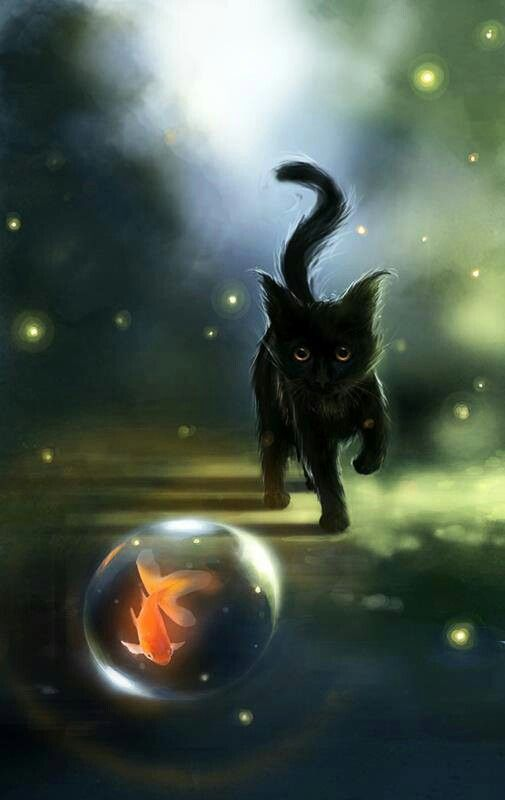 Black Cat Chasing The Fishy Bubble Black Cats Pinterest Cat