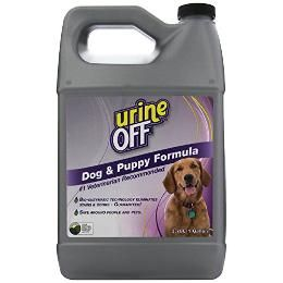 How To Clean Dog Urine From A Wool Rug The Daily Puppy