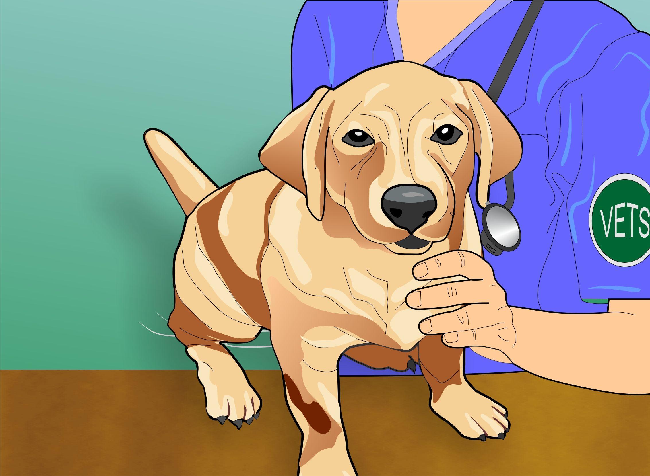 Treat Heat Stroke In Dogs Heat Stroke In Dogs Dogs Dog Steps
