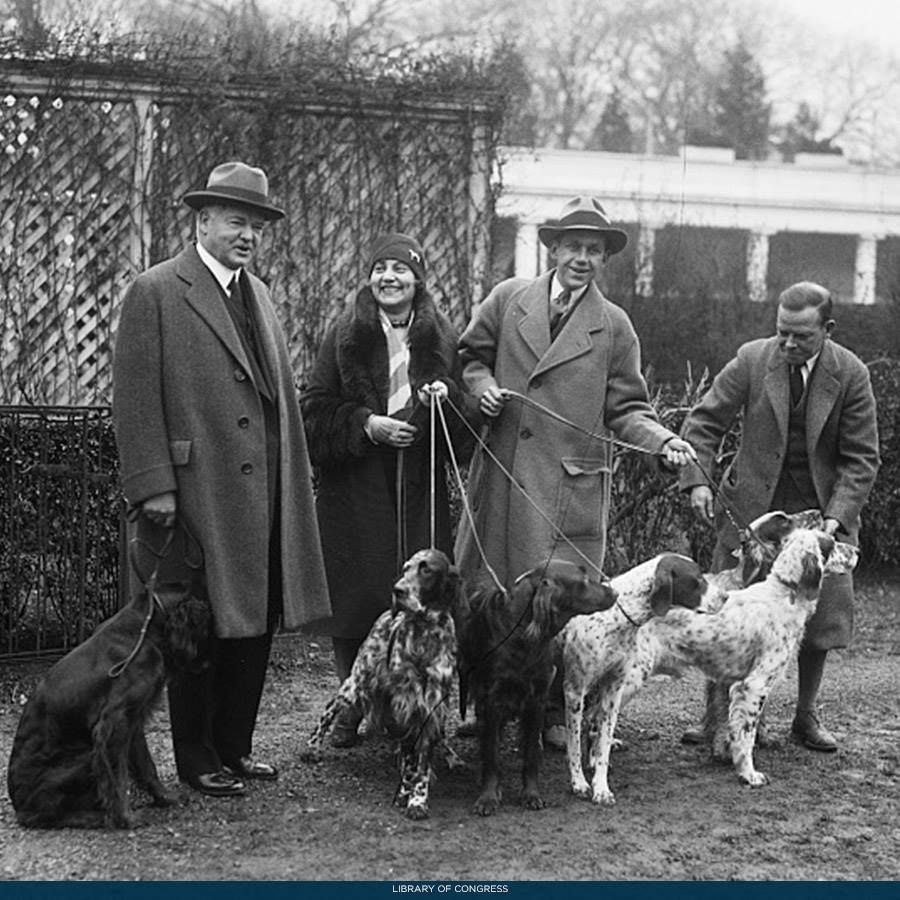 Irish And English Setters Classing Up The White House With