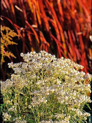 Snap up perennials@Crystal Cassagne good idea, cheap plants for next year