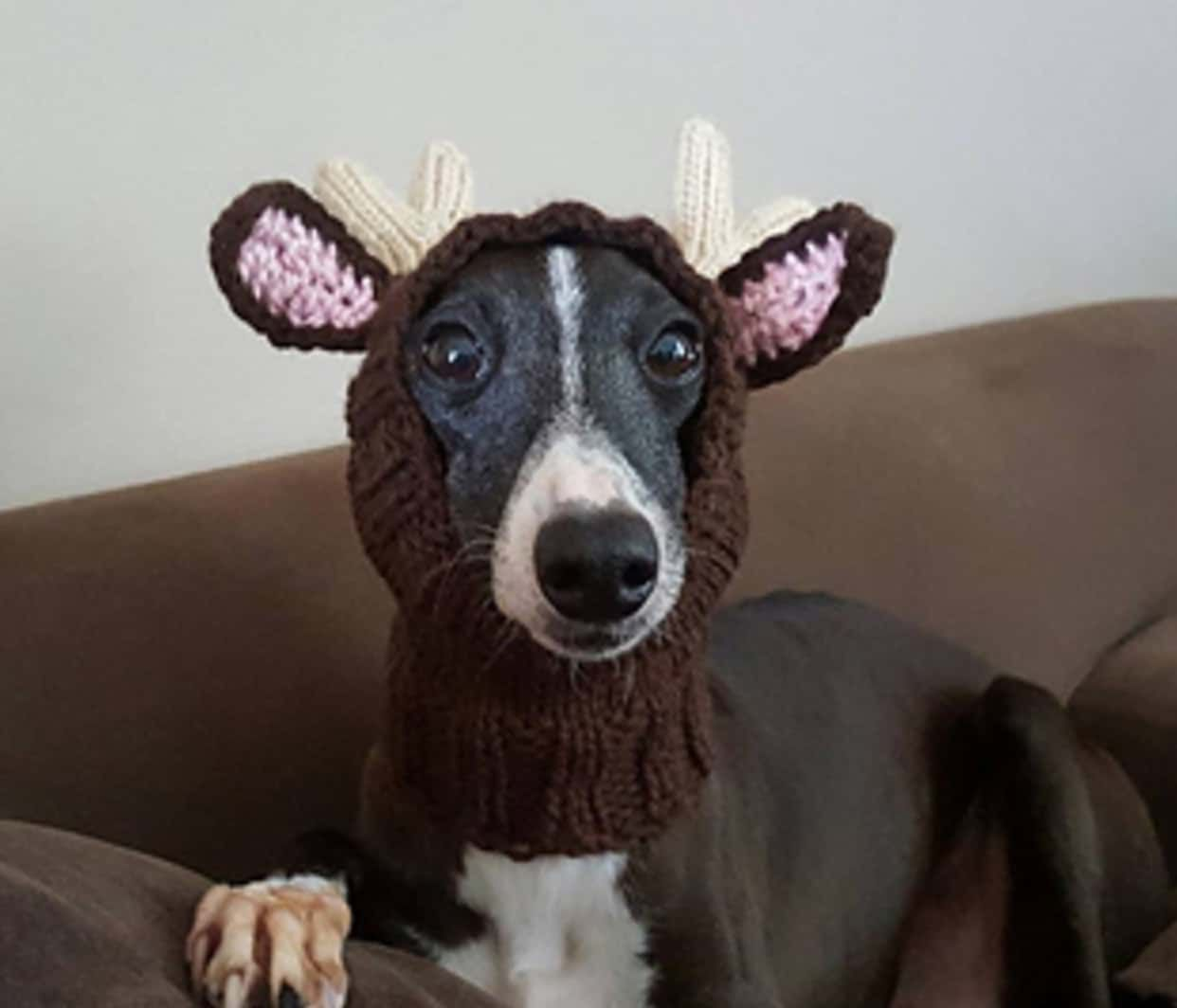 Knitted Dog Hats With Ears Easy Free Patterns Patterns To Try