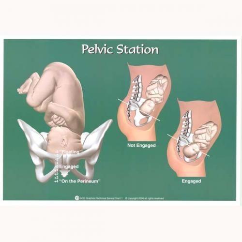 Birthing Station Chart PELVIC STATION CHART OB Pinterest Chart