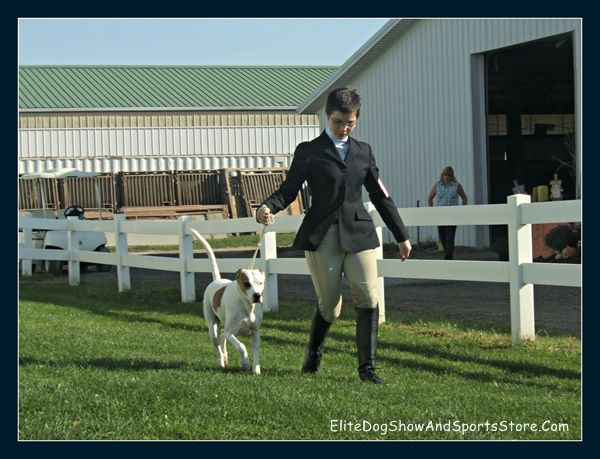 Last practice run before dog showmanship competition at the Delaware County Fair 2011
