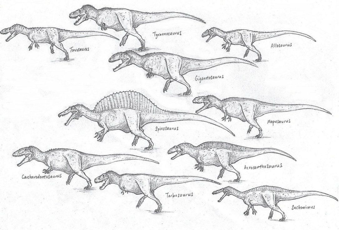 Giant Theropods Overview Thread The World Of Animals Prehistoric Animals Dinosaur Sketch Animals