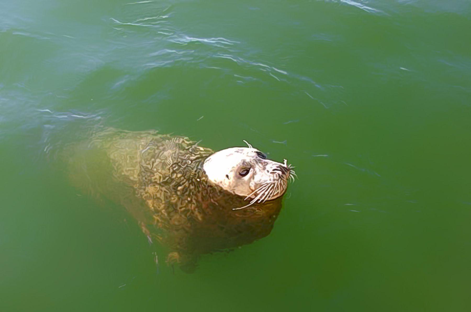 Misha And Luna S Friend The Seal